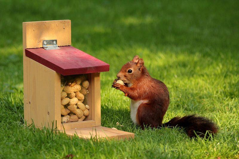 арахис - польза и вред