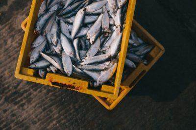 рыба вред и польза