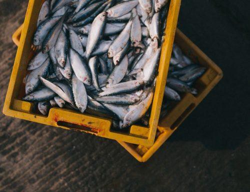 Рыба — полезно или вредно?