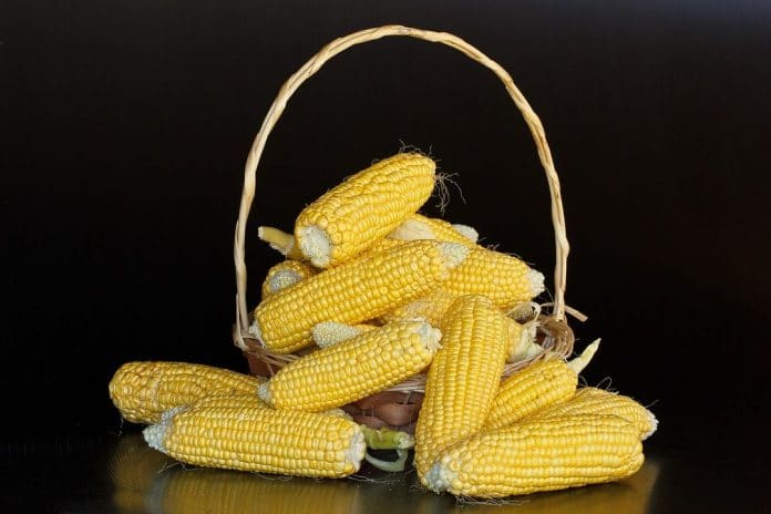 полезная кукуруза